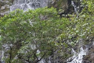 Đồng Hới – Động Phong Nha - Vườn Thực vật – Nước Moọc